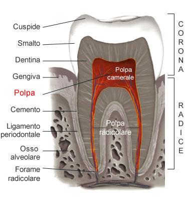 Varietà anatomica canalare
